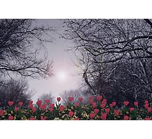 TULIPS GROW Photographic Print