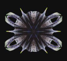 The Big Bang by KimberlyNic