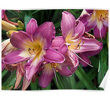 Flashy Lilies Poster