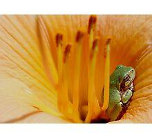 Comfy Cozy Photographic Print