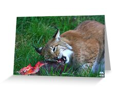 On the wild side.......... Greeting Card
