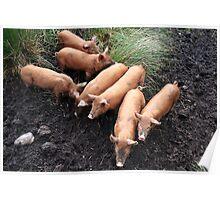 Seven little pigs Poster