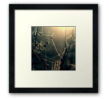 Apple Silk Framed Print