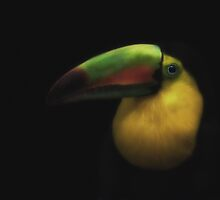 Toucan by Pat Abbott