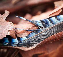 Eurasian Jay Feather by Laksen