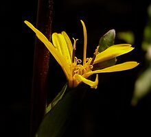 Yellow Flower by rosedew