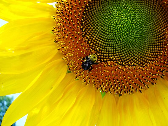 Bumble Bee at work by barnsis
