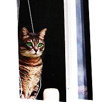 Green Eyed Cat In The Window by Diddlys-Shop