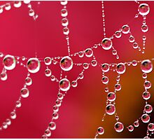 Pearls of Reflections Photographic Print
