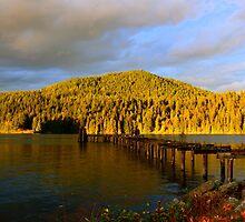 Golden hills by Jean Poulton