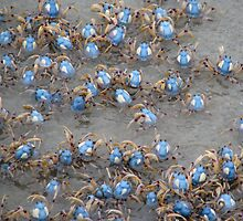 """Soldier Crabs on the March"" by Sue  Fellows"