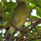 Green Cat Bird by Steve Bass