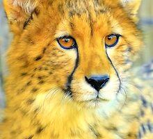 Cheetah by Mundy Hackett
