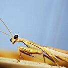 Mantis has eyes on you. by Doty