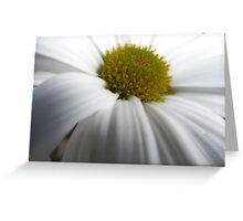 Just another Flower shot. Hmmm Greeting Card