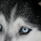 Eyes of the Husky by Donna Ridgway