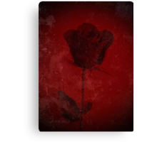 Symbol Of My Love Blooming Red Rose Digitally Enhanced Photograph Canvas Print