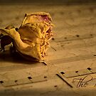 The Rose ~ 1 by Rosalie Dale