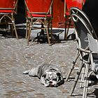C'est une chienne de vie (It's a dog's life!) by Caprice Sobels