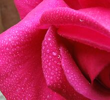 Buxom beauty Rose by Andy Owen