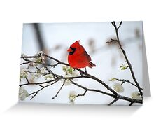 Hanging on for dear life. Greeting Card