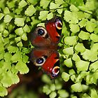 Peacock Butterfly in Greenery by nymphalid
