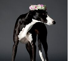 black and white dog with a wreath of flower on its head by PhotoStock-Isra