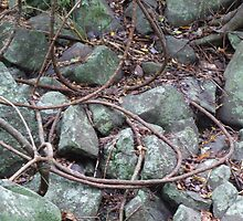 Snaking Vines Green Rocks by Cathie Sherwood