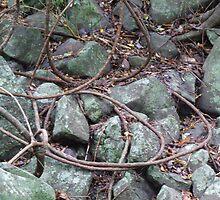 Snaking Vines Green Rocks by Cathie Sherwood