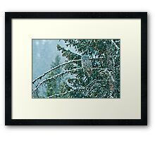 Great Grey Owl in a Snowstorm Framed Print