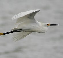 Snowy Egret by declown