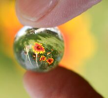 Crystal Ball Garden by Donell Trostrud