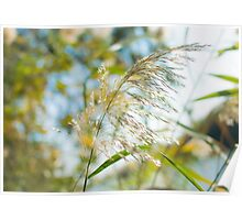 flowering Cane closeup with pastel coloured background  Poster