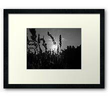 Shine On Me Framed Print