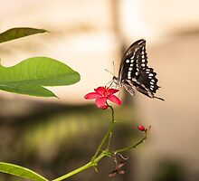 Butterfly on a red flower by NaturePics