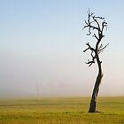 Fog by Rosina  Lamberti
