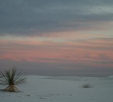 Serenity by Cheyenne