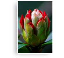 In Bud Canvas Print