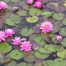 Water Lilies by dragonsnare