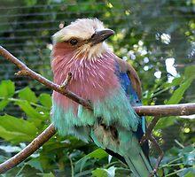 avian colours by Caroline Anderson