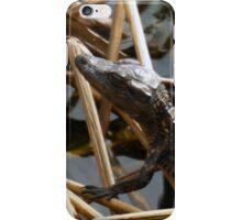Baby Gator in the marsh iPhone Case/Skin