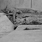 sleepy cat by eeet