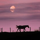 Horse and Moonrise by Dale North Photography