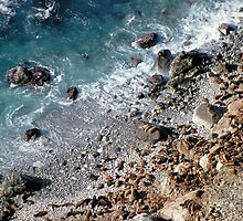 "Elephant Seals • Point Lobos • California • Featured Work in ""Artist Universe"" by Richard  Leon"