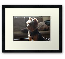 Jonas in the sun.... Framed Print