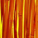 cane by SNAPPYDAVE