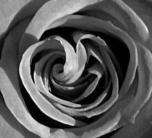 mono rose by SNAPPYDAVE
