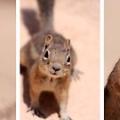 Got nuts? by Varinia   - Globalphotos