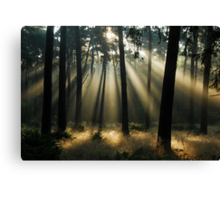 Looking for the morning ghosts Canvas Print