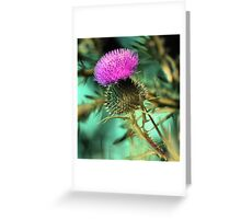 Late Light Thistle Greeting Card